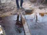 Кот смешно переходит ручей, боится намочиться
